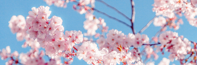 ovulazione primavera